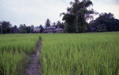 Laos200 (19)